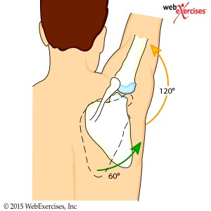 webexercises.shoulder1
